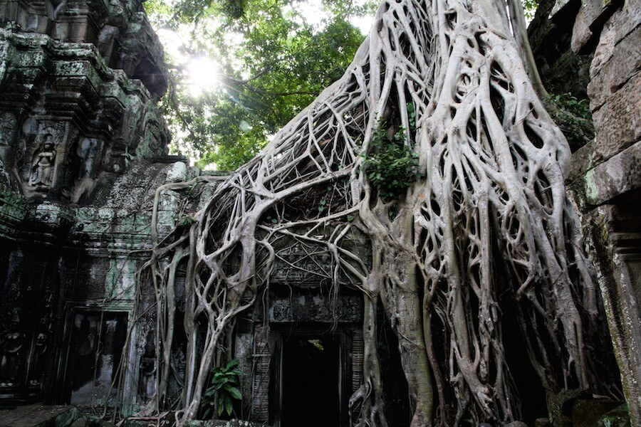 Ta Prohm & Banteay Srei & To