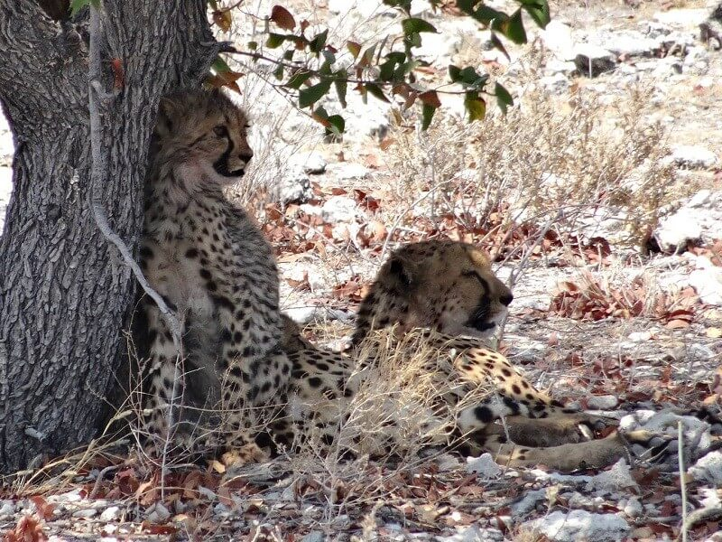 10 Days Kafue National & South Luangwa National Parks and Livingstone
