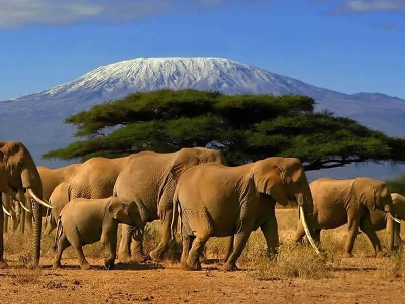 8 Days Kenya Big 5 Highlight Safari