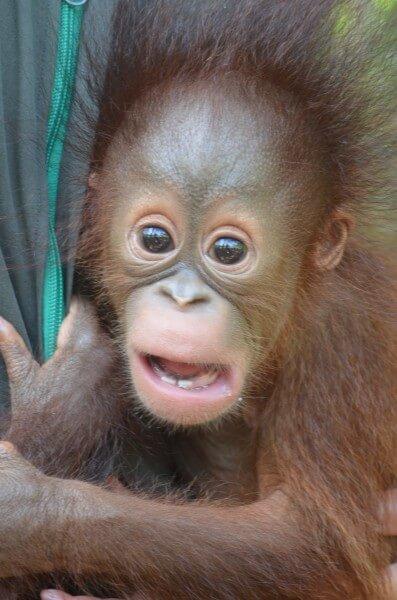 5 Days Orangutan & Mahakam River Cruise