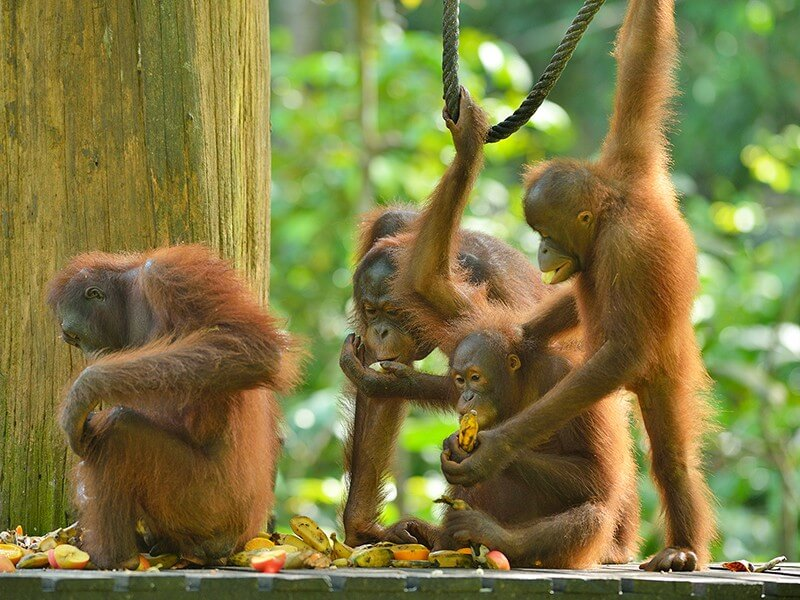 Sandakan Wildlife Wonder