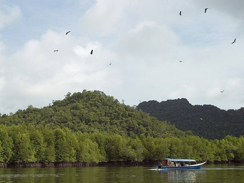 Mangrove Forest and Eagle Wa