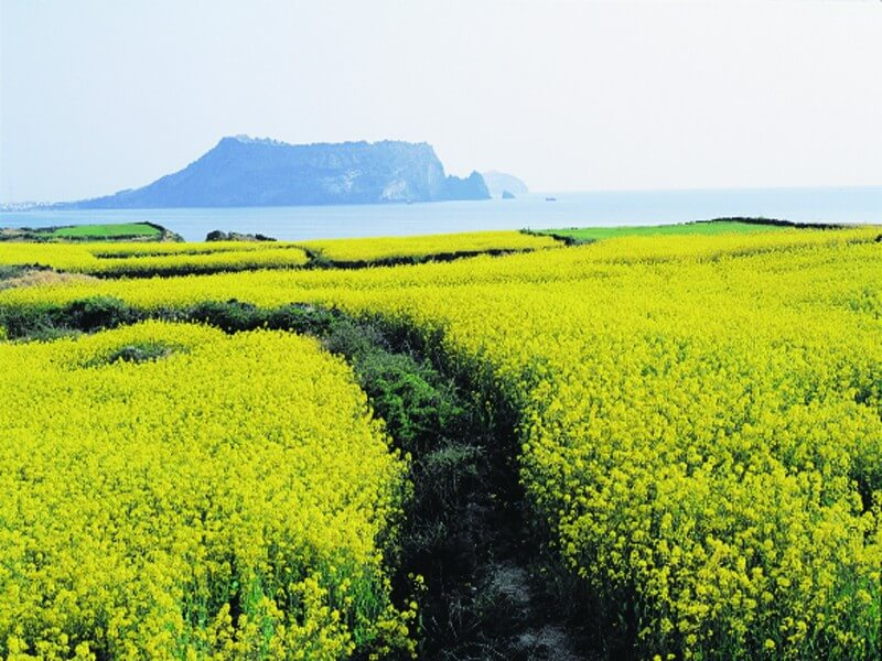 Natural Wonders of the World, JEJU-1