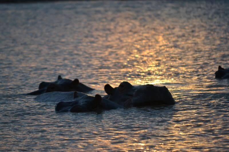 Umfolozi Full Day Safari