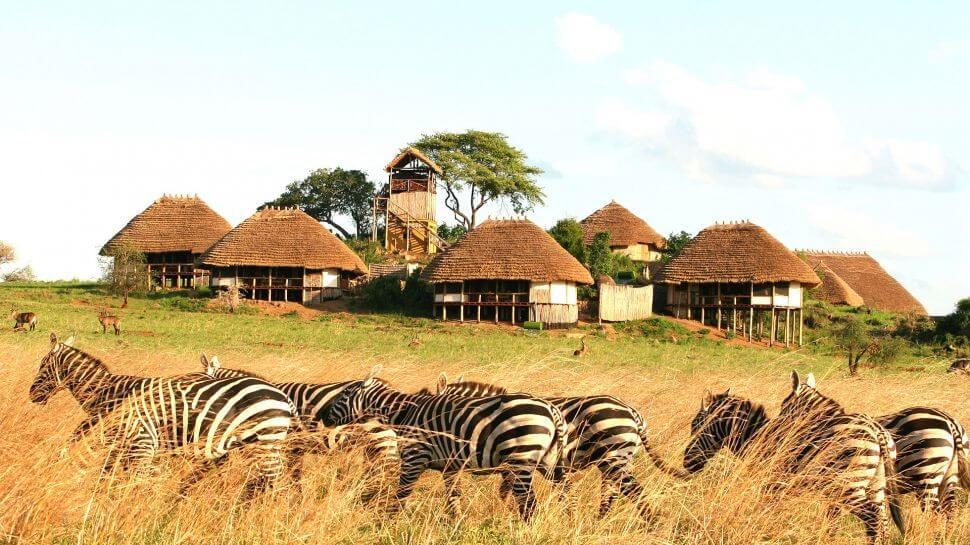 Game drive and transfer
