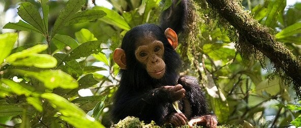 Transfer to Kibale Forest NP