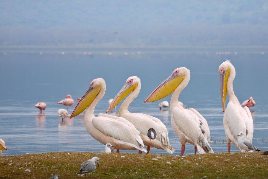 Aberdares to Lake Nakuru Nat