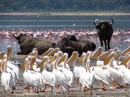 Kenya Highlights Safari