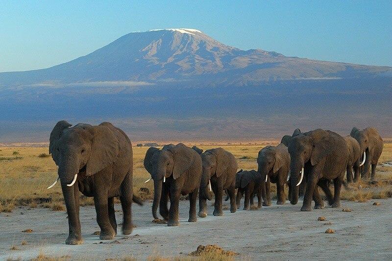 Tsavo West/Amboseli