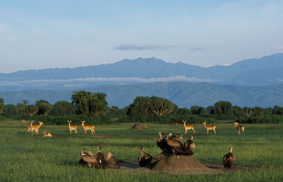 14 Days Uganda Classic Safari