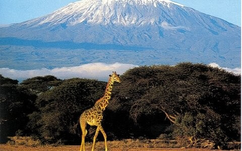 Amboseli/Lake Nakuru