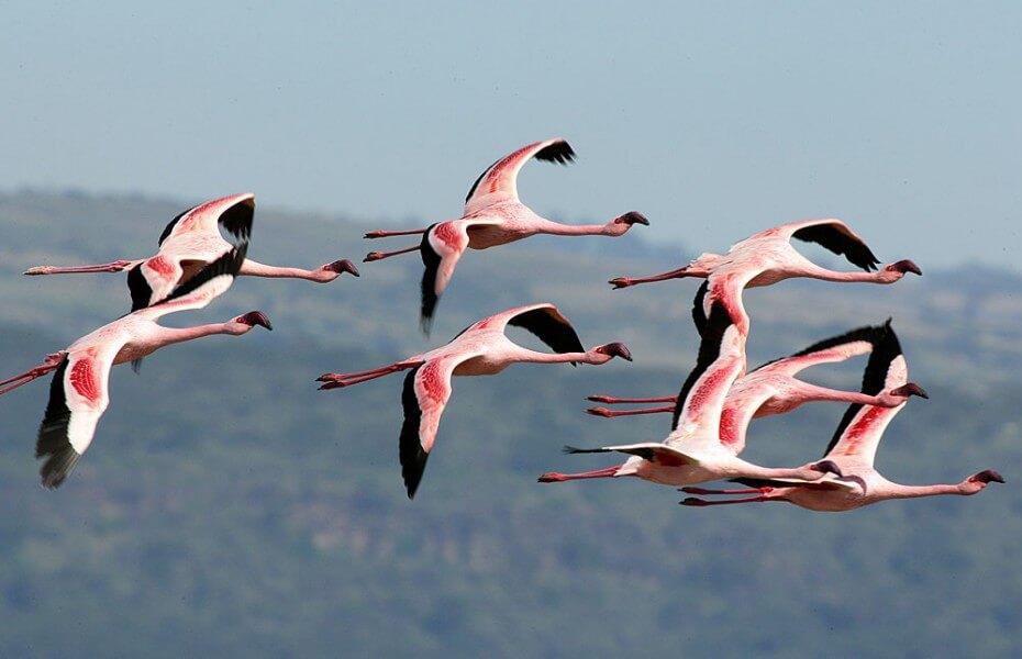 Lake Nakuru Game park