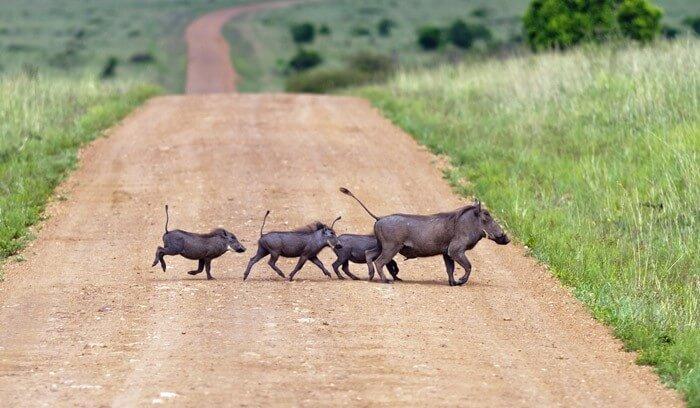 Kenya Explorer Safari