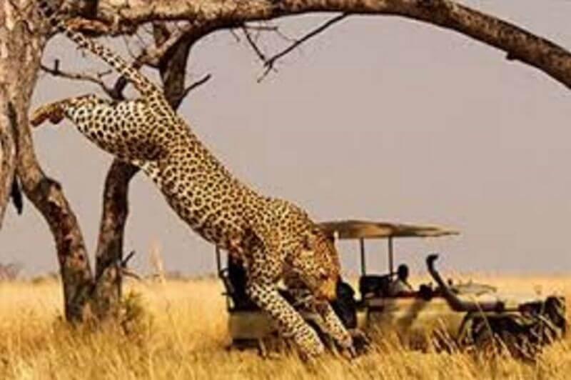 Northern Botswana Tour