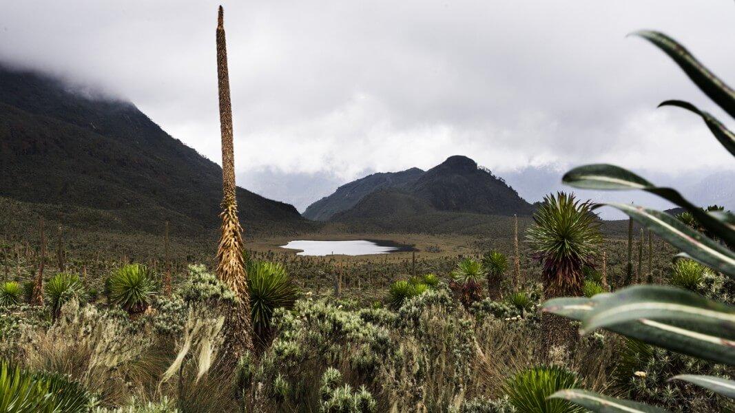 Rwenzori: Bukurungu Trail