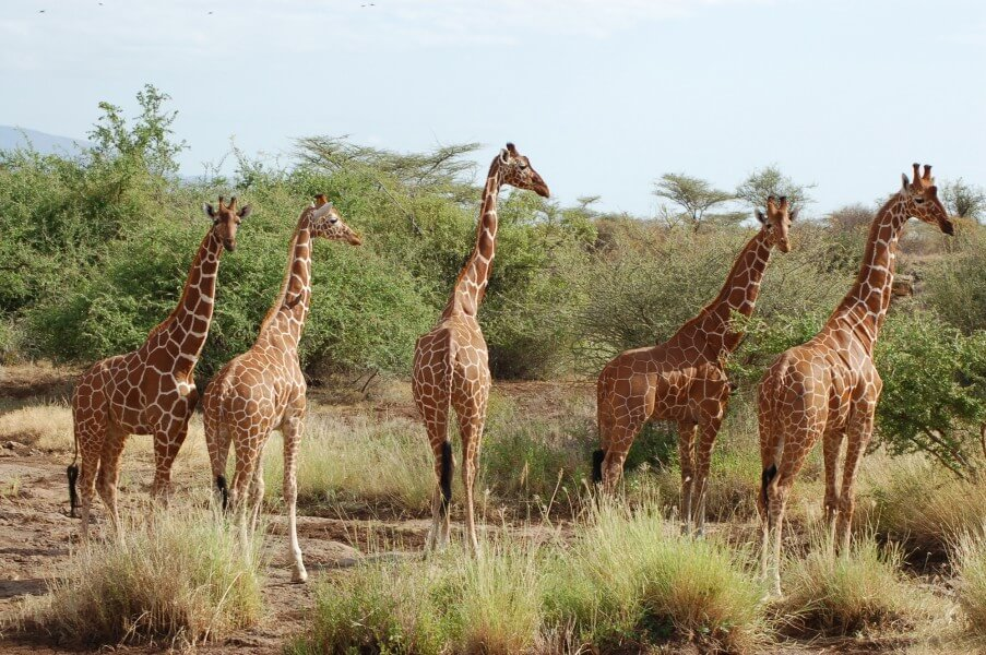 3 Days Samburu Game Reserve Safari