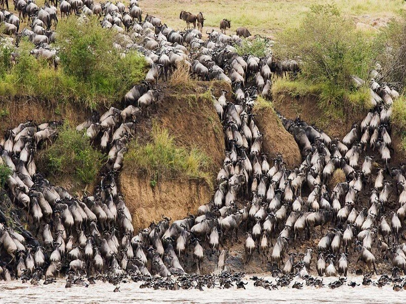 5 Days Wildebeest Migration Safari