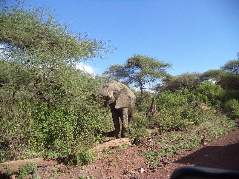 Serengeti National Park – La