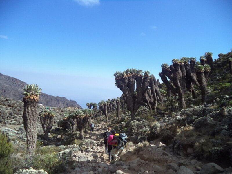 Mount Kilimanjaro Climbing via Lemosho Route 9 Days