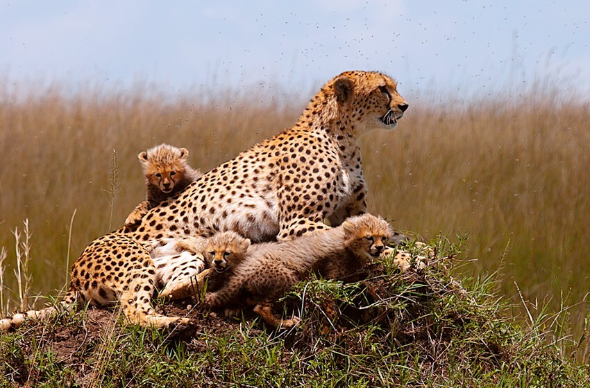 Masai Mara Experience Private