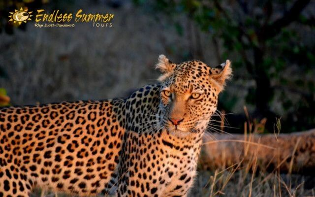 8 Day Ultimate Southern African Safari