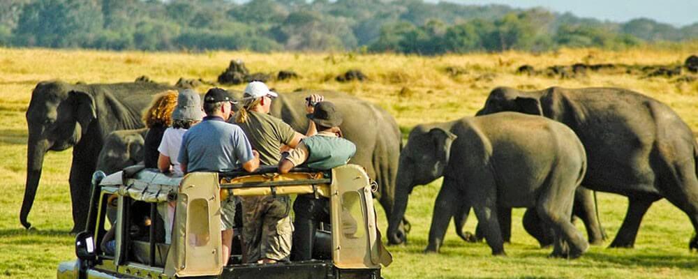 07 Days Cultural Tour Sri Lanka