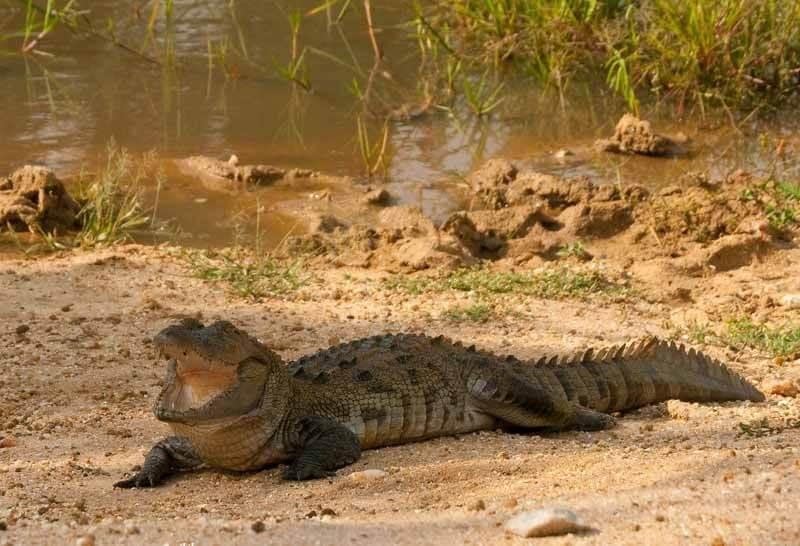 Water fall & Jep Safari