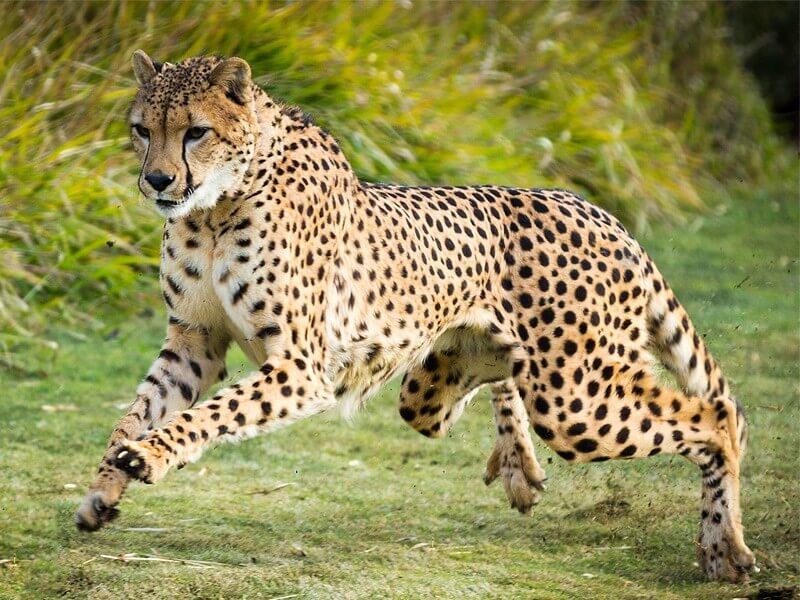 10 Days Elephants and Big Cats Kenya Safari