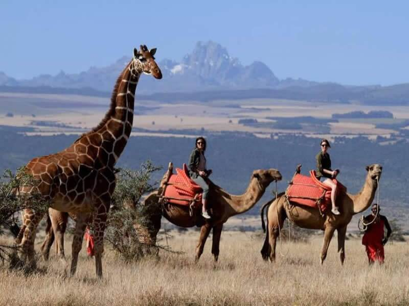 Fly to Lewa Conservancy