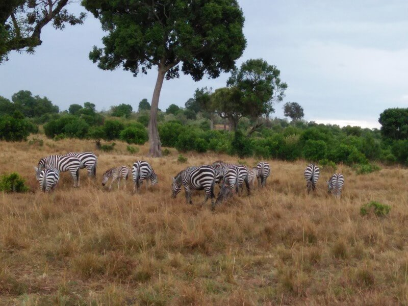 7 Days Glimpse of Kenya Tour