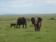 5 DAYS MARA INTREPIDS Air Safari from / to Nairobi