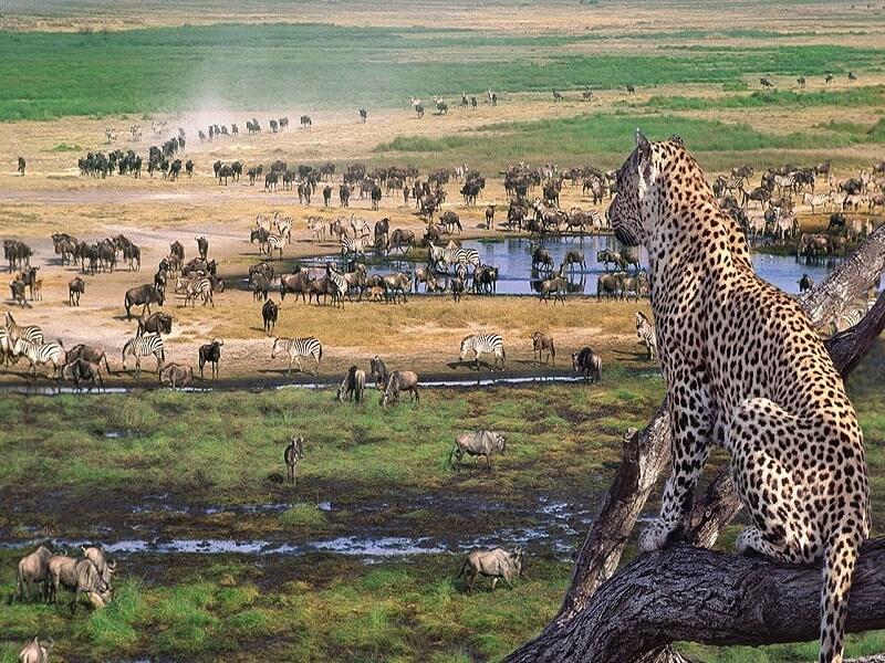Safari to Lake Manyara, Ngorongoro crater