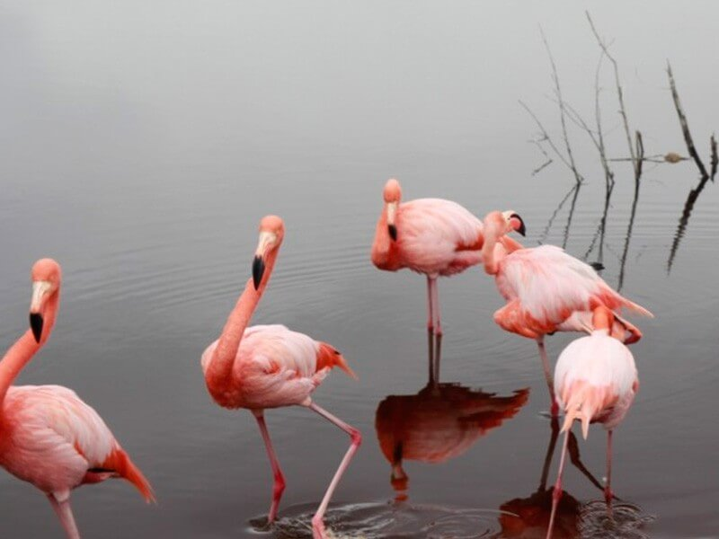 8 Days Galapagos Travel Land Tour - Isabela & Santa Cruz + 1 Navigable Island