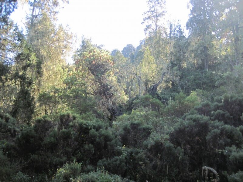 6 - Days Kilimanjaro Marangu route