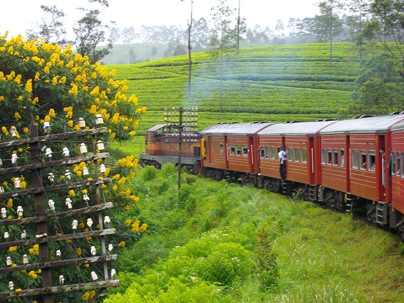 Sri Lanka Wildlife Tour - 13 Days