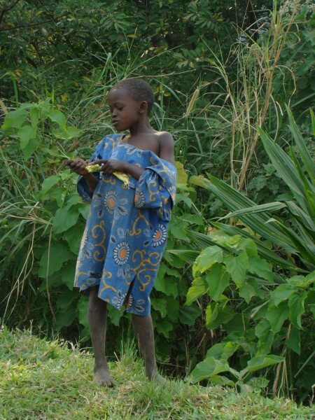 Mountain Gorillas of Bwindi Impenetrable Forest