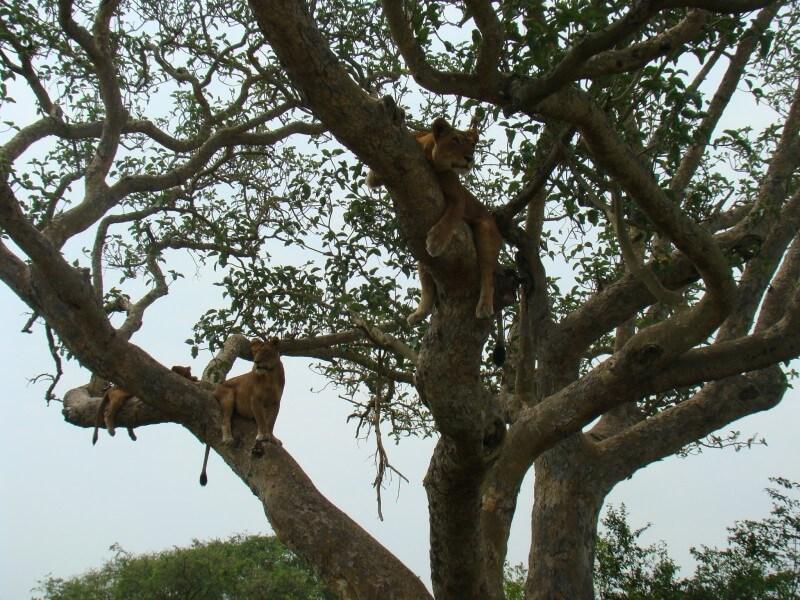 Kibale, Queen Elizabeth & Bwindi