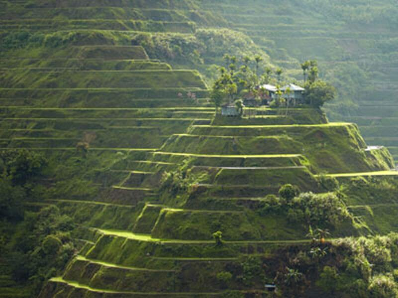 The Rice Terraces & Palawan - 14 Days