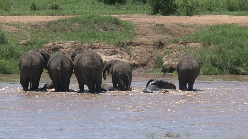 Great Migration, Mara river crossing (July to October)
