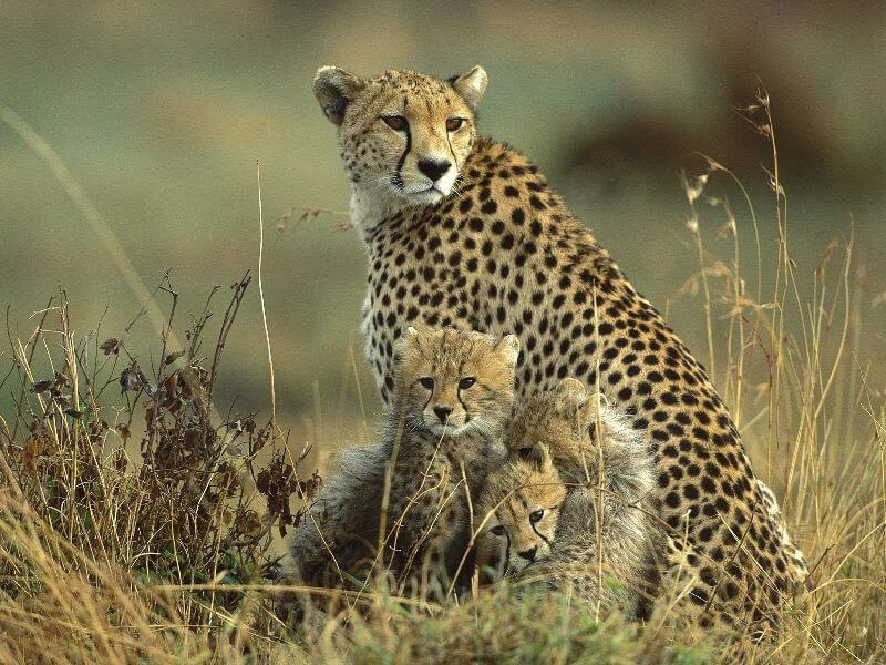MASAI MARA - FULL DAY