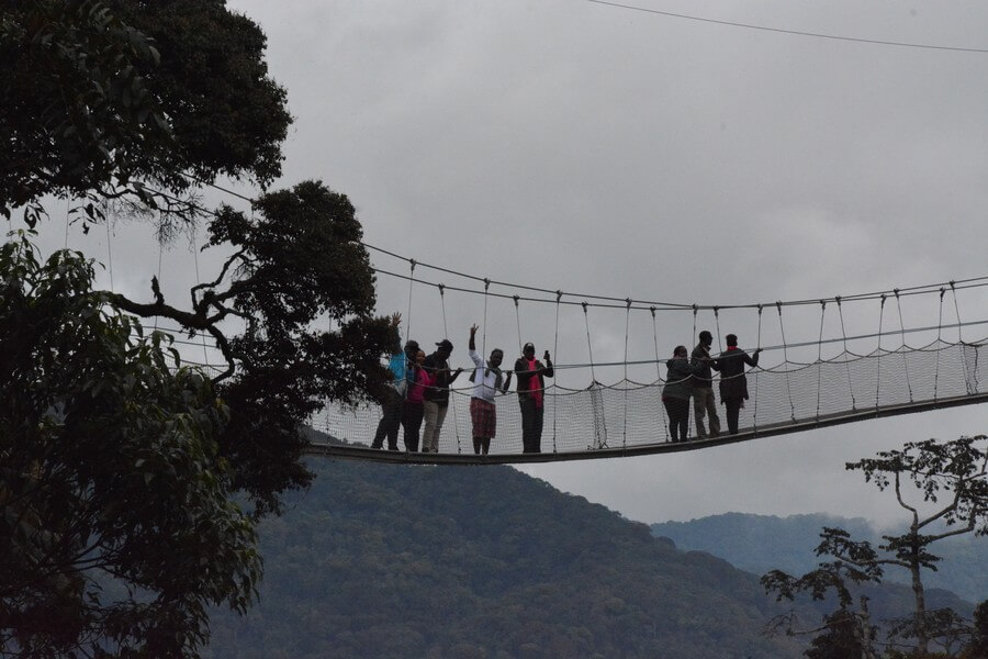 Primates Tracking in Nyungwe