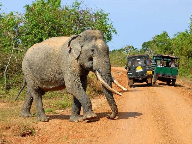 Sri Lanka - 15 days