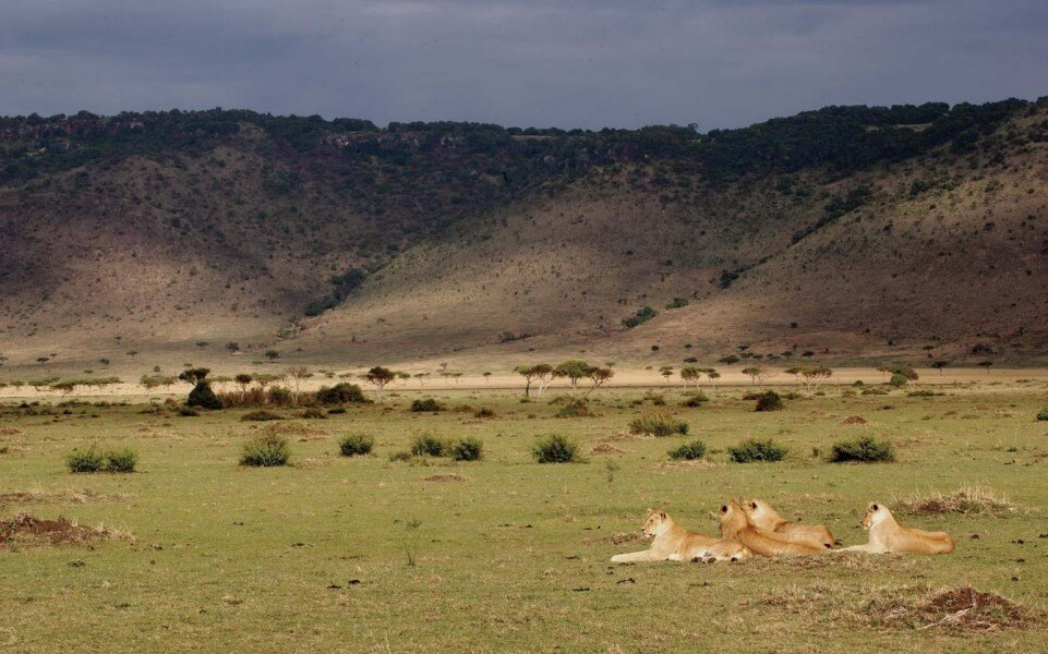 5 days MASAI MARA and NAKURU from & to Nairobi