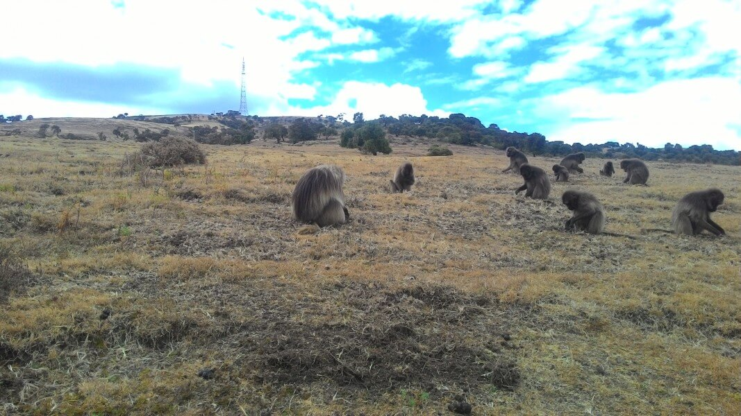 Drive to the Simien Mountain