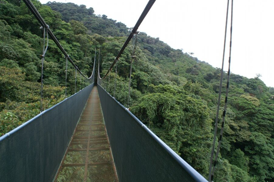 EXPLORING THE CLOUD FOREST