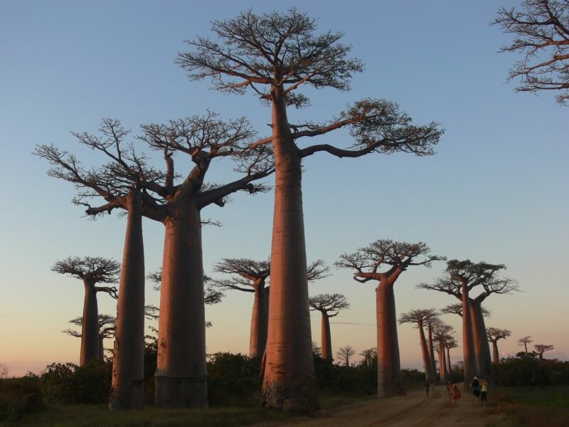 14 DAYS ADVENTURE IN MALAGASY SOUTH