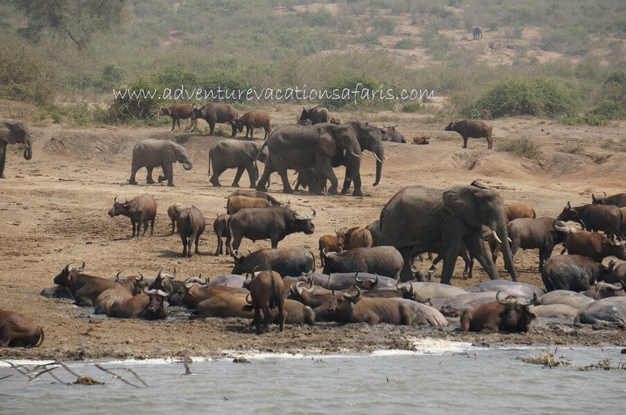 9 Days Rafting and wildlife safari