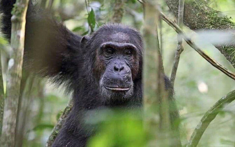 PROGRAM FOR UGANDA RWANDA TANZANIA