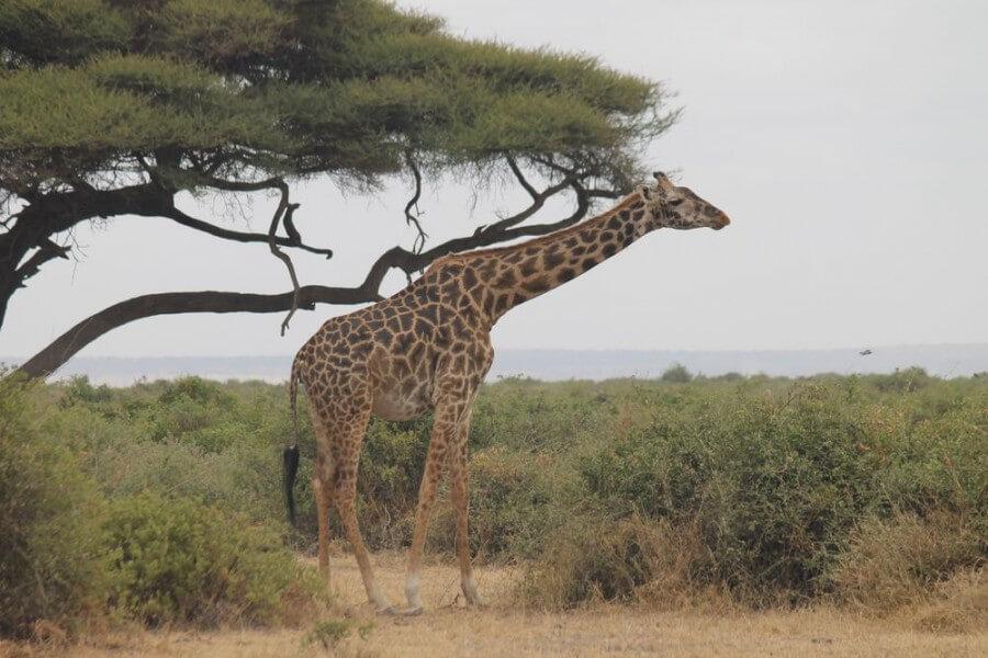 Nairobi / Amboseli ( Appr 25