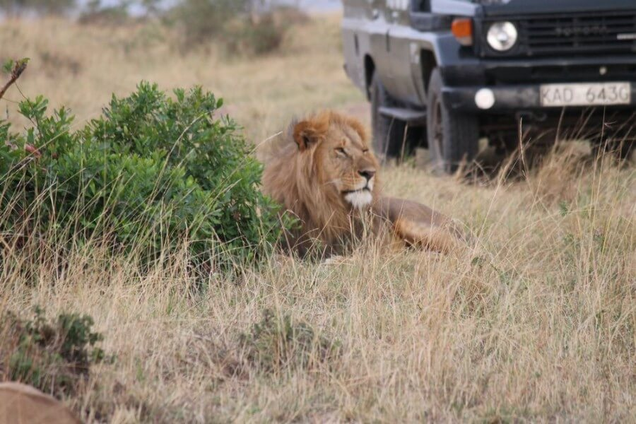 Amboseli / Nairobi (Appr 25)